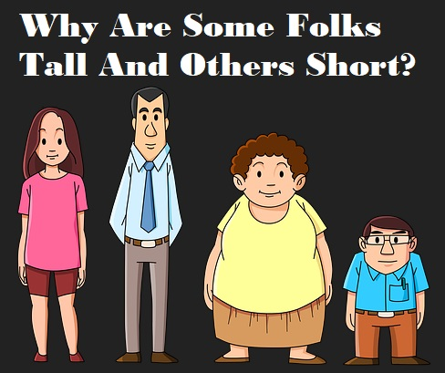 Why Are Some People Taller Than Others