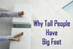 Why Do Taller People Have Bigger Feet
